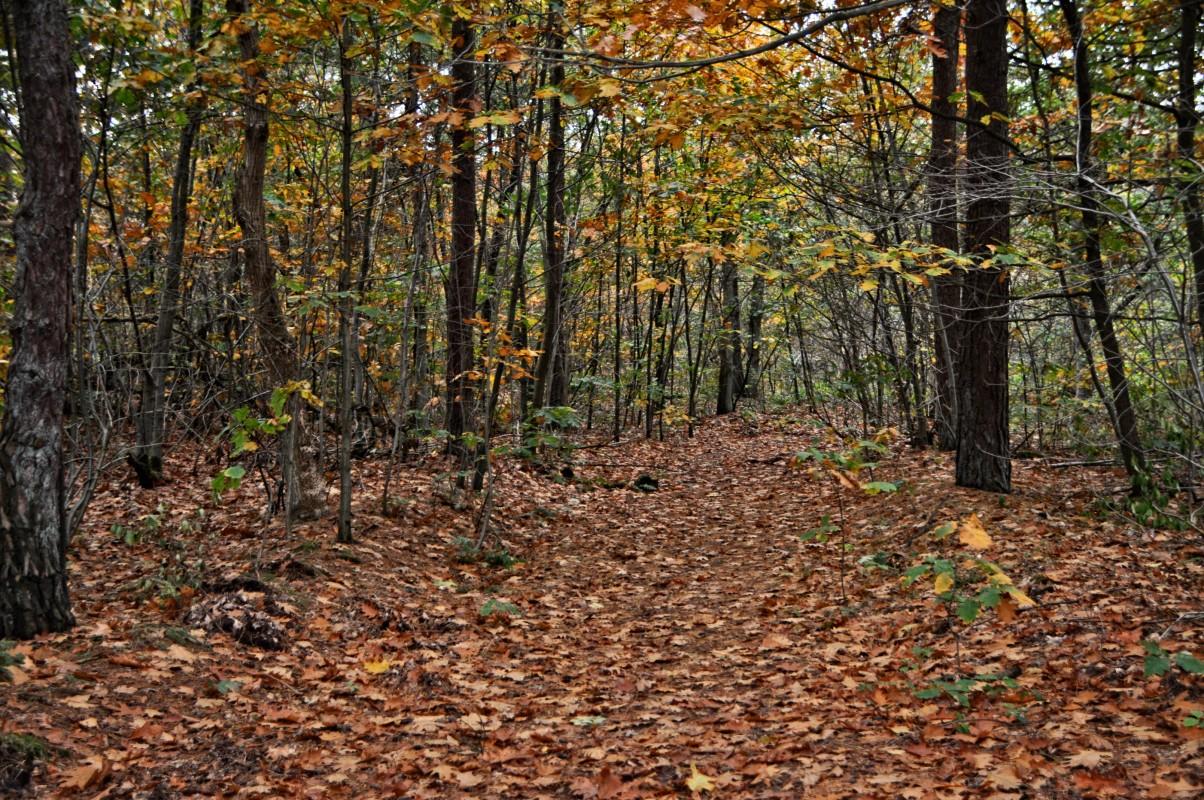 Wosterhouts wakker worden: de bossen