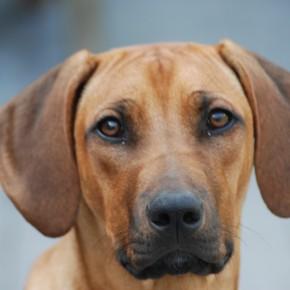 Wees alert: Oosterhoutse hond bezweken na vergiftiging