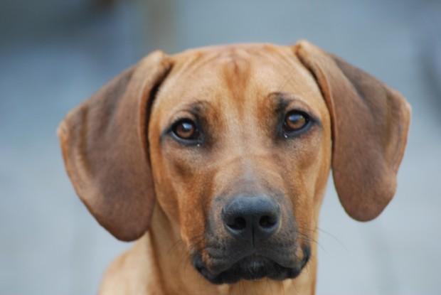 Hond (niet in kwestie) Bron: Albelli.nl